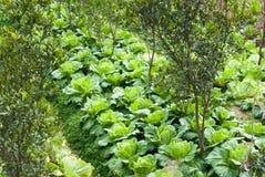 Растущие овощи Стоковое Изображение