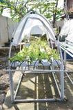Растущие органические овощи или нетоксический овощ Стоковые Фотографии RF