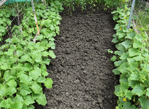 Растущие органические овощи Стоковая Фотография