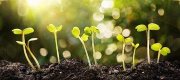 Растущие семена на естественной солнечной предпосылке Стоковое фото RF