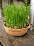 Растущий бак украшения с травой стоковое изображение
