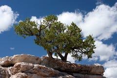 растущий вал камня уступчика Стоковая Фотография RF