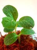 растущий вал 10 Стоковые Изображения RF