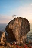 растущий вал Стоковая Фотография RF