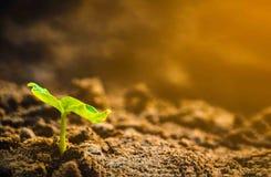 растущий завод Молодой завод в утре и свет на земной предпосылке Стоковое Фото