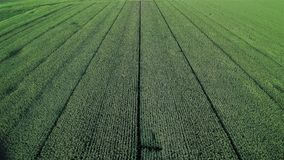 Растя плантация мозоли в Испании стоковое изображение rf