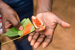 Расцветка еды орлеана Стоковые Изображения RF