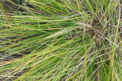 Расцветка насекомого защитная Стоковая Фотография RF