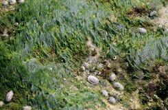 Расчесываемое море Стоковая Фотография RF