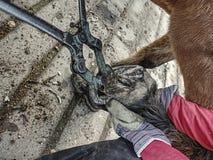 Расчистка вещества фермы лошади и копыто резать стоковые фотографии rf
