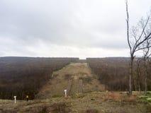 Расчистка в лесе для газопровода Стоковое Фото