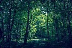 Расчистка леса стоковые изображения rf