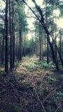 Расчистка леса Стоковое Изображение