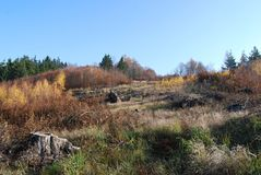 Расчистка леса в осени стоковое изображение rf