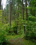 Расчистка леса лета стоковая фотография