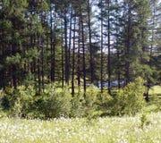 Расчистка леса озером стоковая фотография