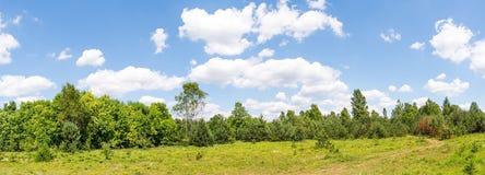 Расчистка леса около леса стоковые фото