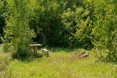 Расчистка леса со старым деревянным столом и стендами стоковые изображения rf