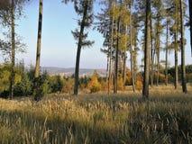 Расчистка леса с солнечностью лета стоковые фото