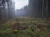 Расчистка Glade с мхом покрыла пень дерева и туманное елевое tre Стоковое фото RF