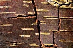 Расшива березы в зиме. Стоковое Фото
