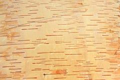 Расшива березы Стоковые Фотографии RF