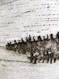 Расшива березы Стоковое Изображение