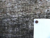 Расшива белого дерева удара предпосылки годовалого который Стоковое фото RF