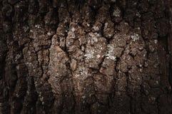 Расшива Брайна предпосылки дерева стоковые изображения rf