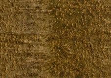 расшива Бук-дерева Безшовная картина предпосылки иллюстрация вектора