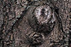 Расшива грецкого ореха Стоковая Фотография RF