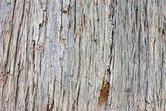 Расшива дерева сосенки Стоковое Фото