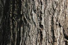 Расшива дерева Стоковые Изображения