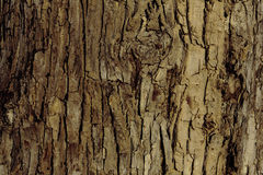 Расшива дерева на береге реки Стоковое фото RF