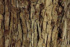 Расшива дерева на береге реки Стоковая Фотография RF