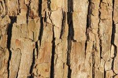 Расшива дерева на береге реки Стоковые Изображения