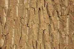 Расшива дерева на береге реки Стоковая Фотография