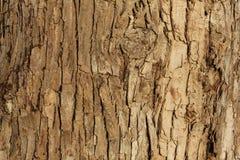 Расшива дерева на береге реки Стоковые Изображения RF
