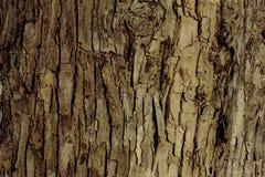 Расшива дерева на береге реки Стоковые Фото