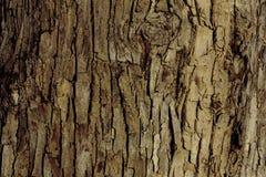Расшива дерева на береге реки Стоковые Фотографии RF