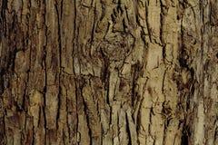 Расшива дерева на береге реки Стоковое Фото