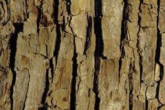Расшива дерева на береге реки Стоковое Изображение RF
