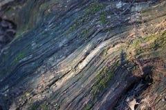 Расшива дерева с мхом Стоковая Фотография RF