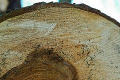 Расшива, дерево, текстура стоковое фото
