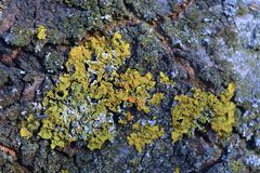Расшива и мох предпосылки треснутые макросом стоковое фото rf