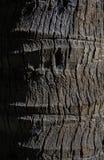 Расшива кокоса Стоковое Изображение