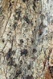 Расшива от дерева vas Стоковые Фотографии RF