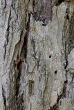 Расшива от желтого дерева Стоковая Фотография