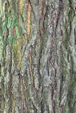 Расшива от зеленого дерева Стоковая Фотография RF