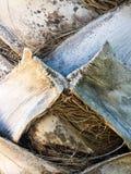 Расшива пальмы стоковое изображение